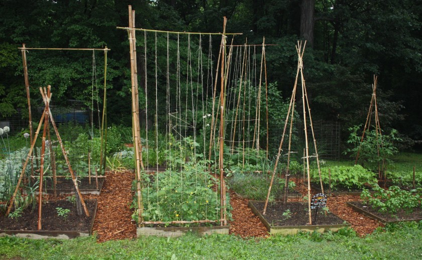 Our bamboo trellis tutorial comes in at number one.