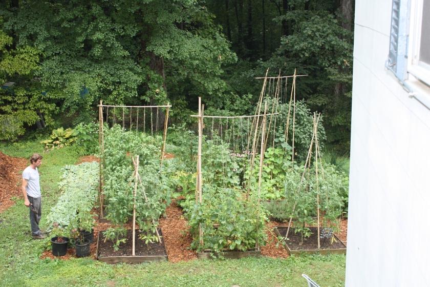 Garden in 2011