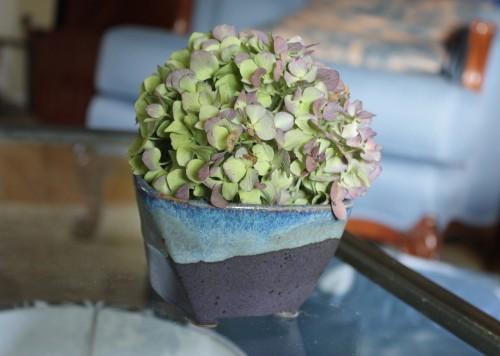 A single hydrangea blossom