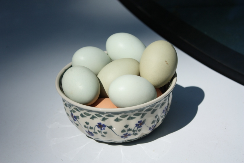 Our neighborhood chickens lay beautiful eggs.
