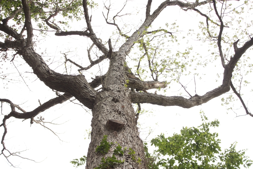 It's a scary tree.