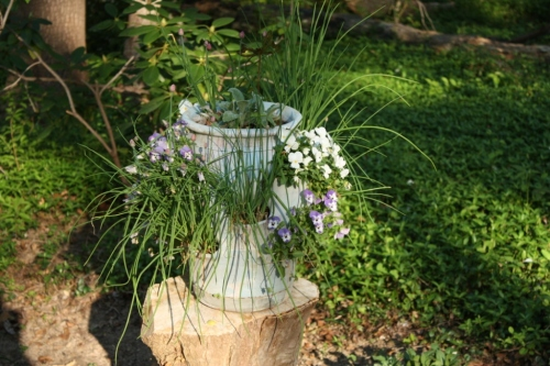 The chives bloomed and the violas cascaded from their holes but this pot is history at The Glade.