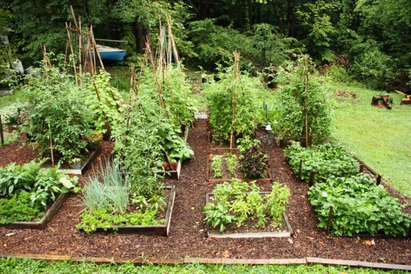 Garden in 2012