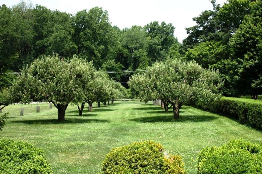 Here's the apple orchard in summer.