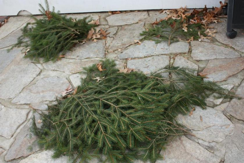 Pine boughs cut from the yard.