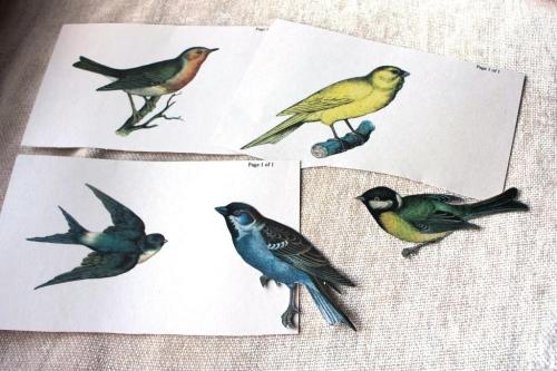 I printed out free bird graphics keeping the sizes of the birds similar.