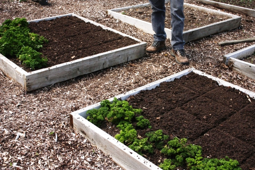 The 4 foot by 4 foot squares are topped with compost and marked into 1 foot by 1 foot squares.