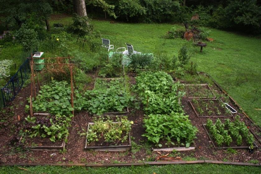 Garden in 2013