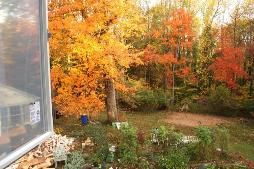 The view from inside the window over the bump-out includes the potager (foreground) and the back yard.