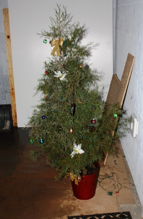 We had a small tree the year we were