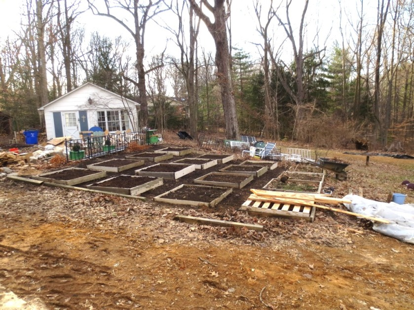 We still have some piles of debris to remove and lots of landscaping in addition to the vegetable garden.