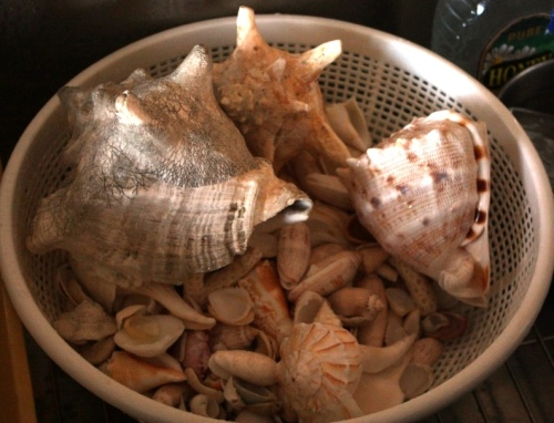 If seashells can't get me in the warm weather mood, nothing can.