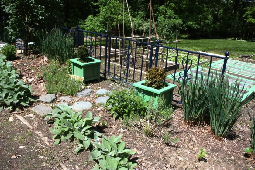 I love spring in the potager before the weeds take over.