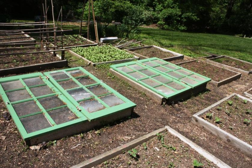 Last year I painted these old window frames to use as portable cold frames in the garden.
