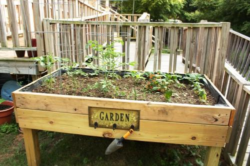 Ultimately the vegetables should be able to be harvested from the ramp behind the planter.
