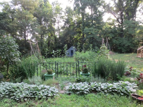 A row of sunflowers stands parallel to the gate of the potager between the lawn and the garden.