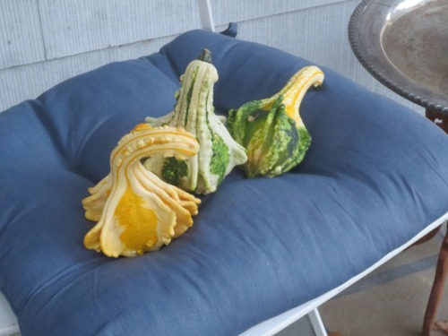Fresh colored gourds - green, yellow and white.
