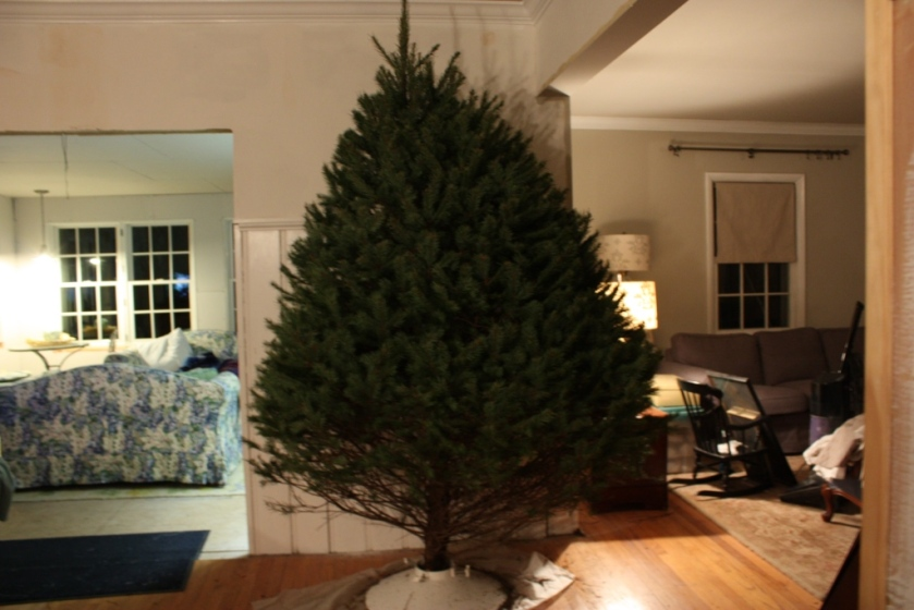 From the kitchen view Charlie would like to give the tree a little trim -- a slippery slope.