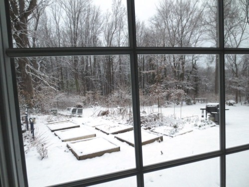 The outlines of the garden squares are just visible from the kitchen window.