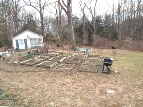 A month ago Charlie weeded the vegetable garden to get it ready for early spring planting.