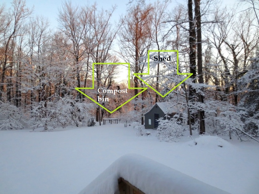 The shed has looked like a little house in the woods during the recent snow events.
