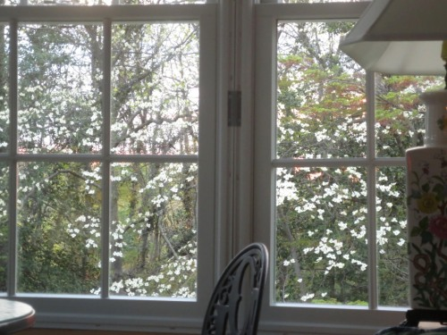 The conservatory windows are filled with a dogwood blossom view.