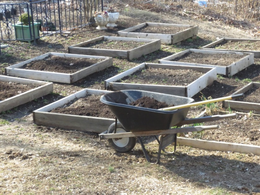 Annually Charlie top dresses each bed with compost from our compost pile near the edge of our property.