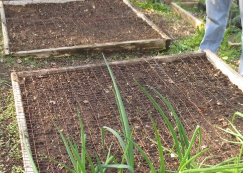 Metal mesh fencing covers the newly planted squares.