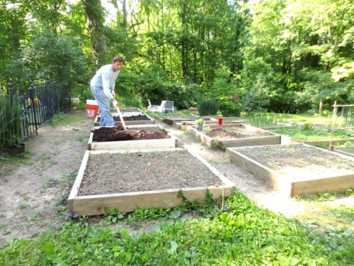 Charlie carefully refills each square with compost and extra dirt then hoes and rakes it before he plants seeds or seedlings.
