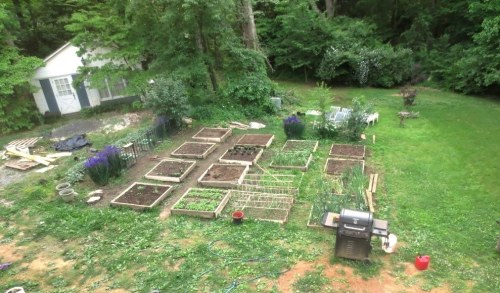 The radishes are almost ready to harvest -- 2nd square from the left, front row.