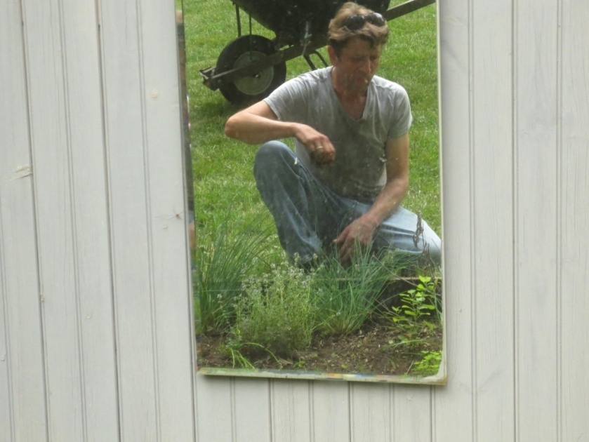 I hung a mirror on the front of the shed in which I caught reflection of Charlie clearing out the herb square.