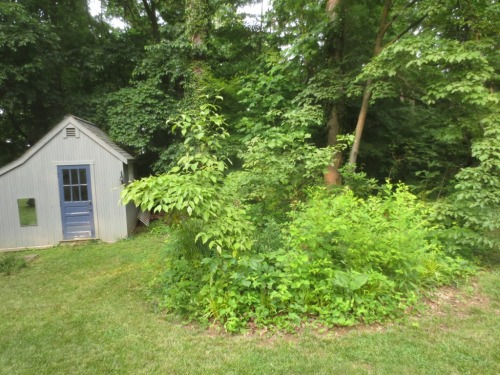 The choke cherry trees and tall weeds have taken over the children's garden.