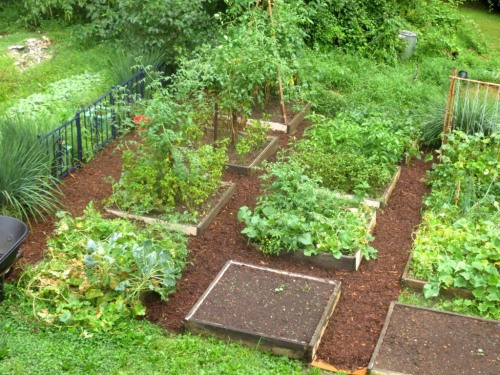 After the aisles are mulched I even saunter into the garden to pick a few vegetables.