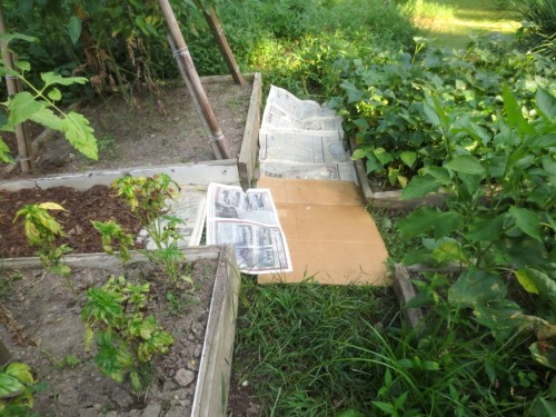 Newspaper and cardboard are laid directly on the weeds to inhibit their growth.