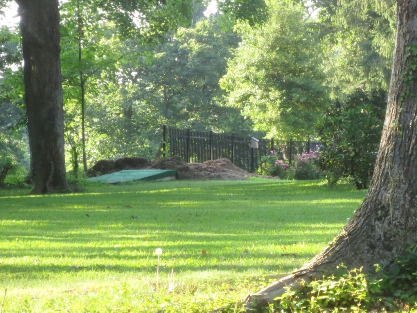 A large pile of mulch from a newly downed tree in the yard across the street.
