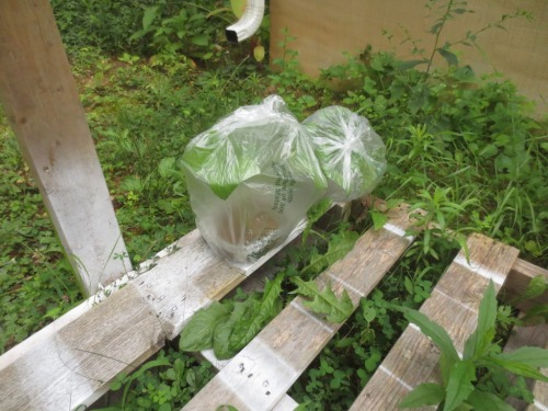 A neighborhood dog carried off one of these hydrangea propagators never to be seen again.
