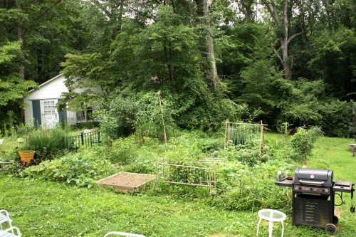In July the potager becomes weedy and overgrown.