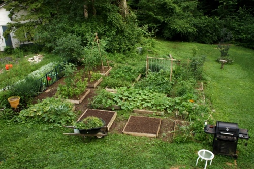 Charlie did some diligent weeding to get the July garden ready for additional planting.