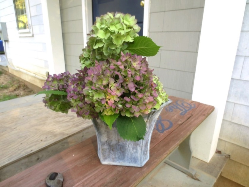 I love the mottled look of a fall hydrangea as much as the bright blue of the hydrangea in spring.