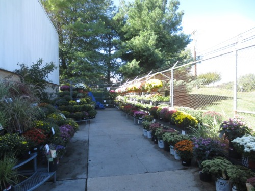 These shaded plants at the hardware store should last much longer than the ones stored in the sun all day.