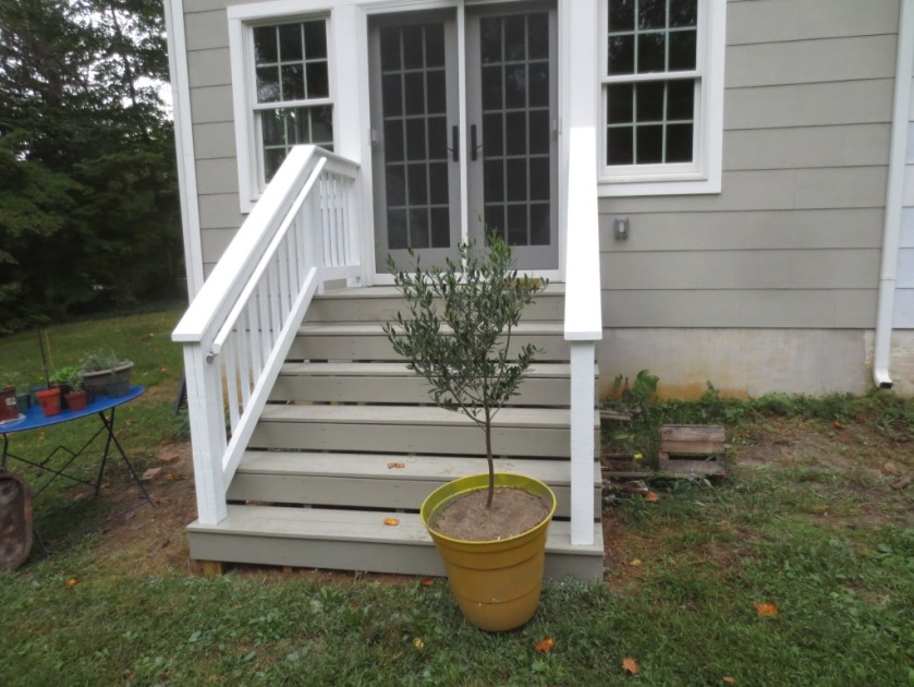 I need a little help to get the olive tree up to the top step.