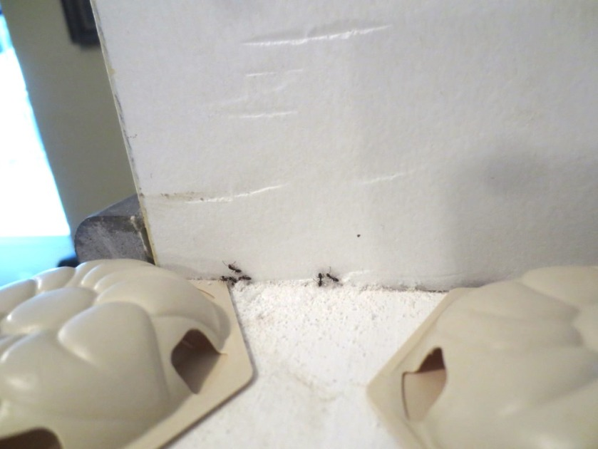 While we do have an ant problem we'll probably call a friend who has a pest control company.