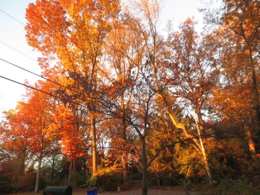 The morning sun in the trees in front of the house is spectacular.