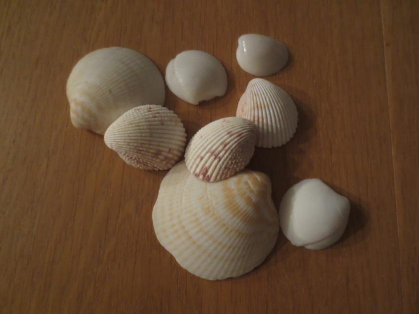 Some plain shells.
