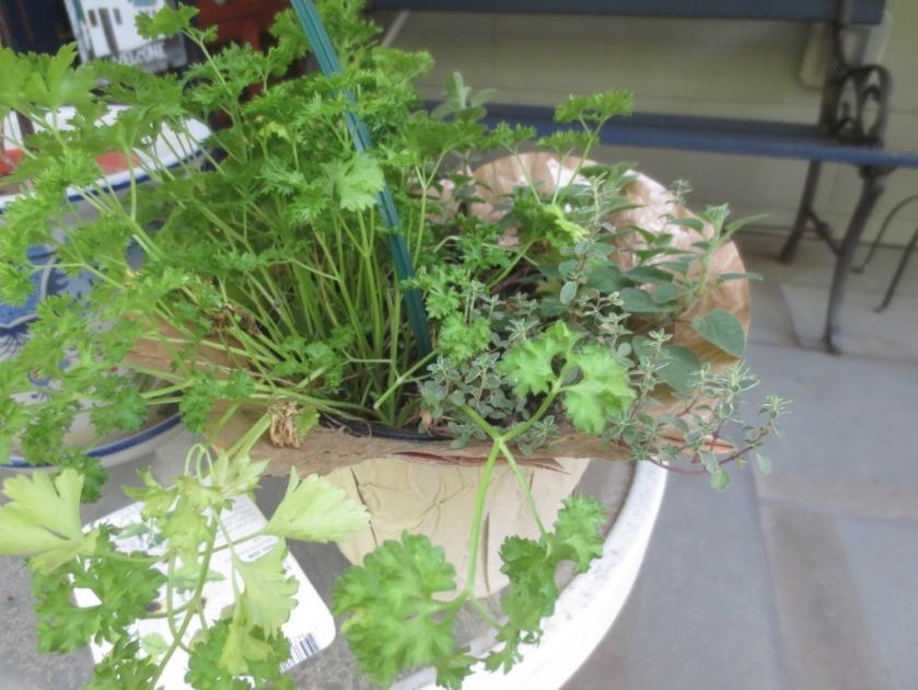 A little pot of herbs from Trader Joe's.