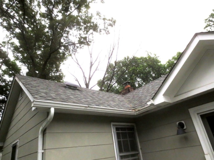 The branches of the second dead tree were just visible above the roof.