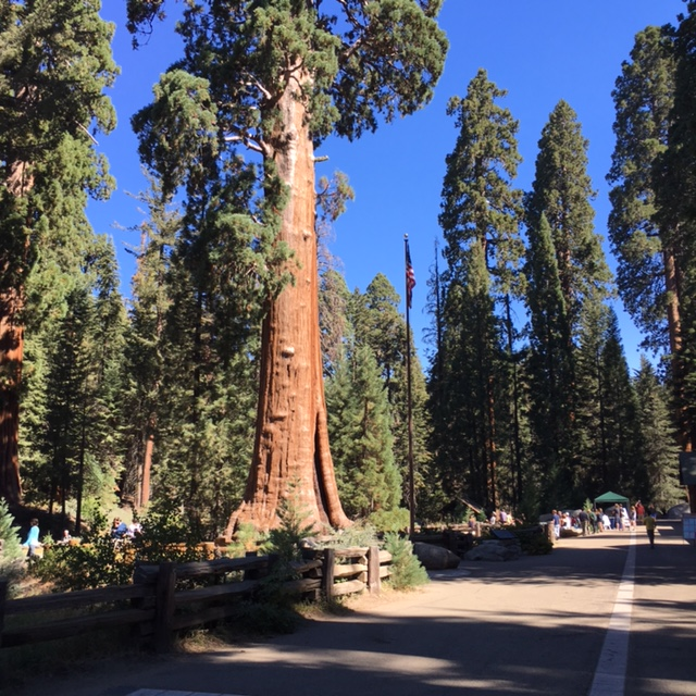 The Sequoias were interesting to see but for me the ride to see them was horrifying.
