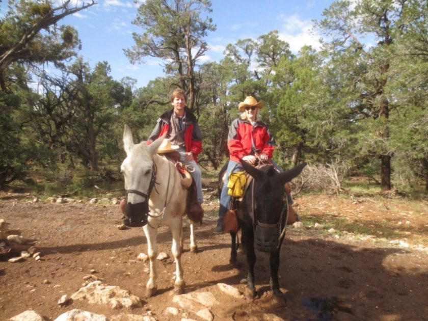Charlie and Jo on mules on the Canyon rim. The mules are muzzled at the request of the Park Service to restrain them from eating the wild foliage.