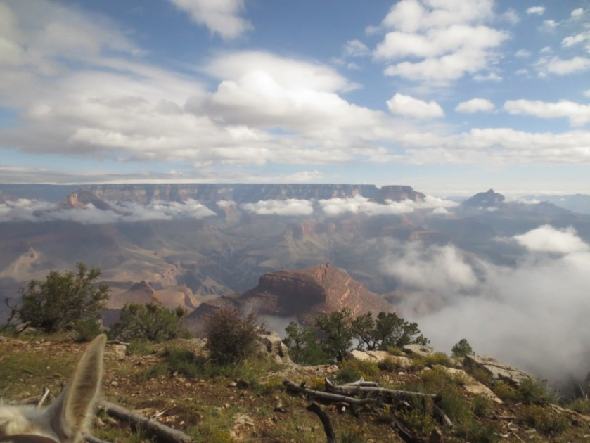 We were above the clouds on the rim of the Grand Canyon.