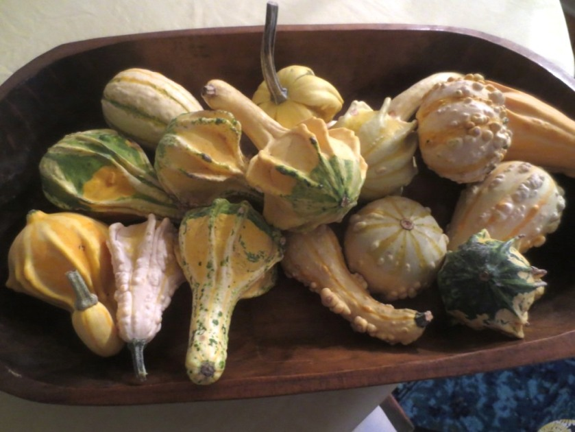 The gourds will decorate the dining room table.